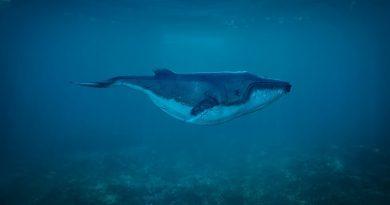 Japão pede fim da moratória de caça comercial à baleia em encontro internacional