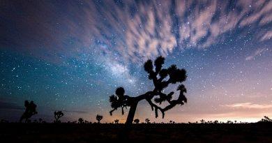Árvores símbolos de parques americanos podem ser extintas por causa de aumento anormal da temperatura