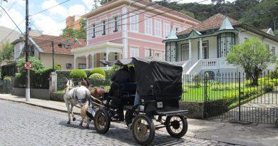 Moradores de Petrópolis votam pelo fim dos passeios de charretes com cavalos