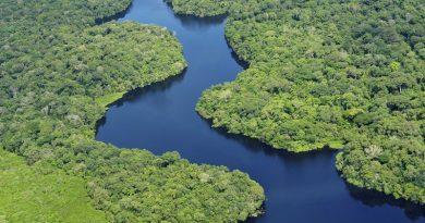 Cinco países abrigam 70% do que sobra da natureza selvagem do planeta: o Brasil é um deles!