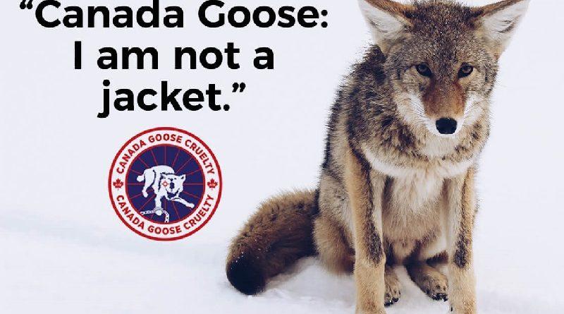 Marca de roupas que usa pele de coiotes e penas de aves sofre boicote internacional