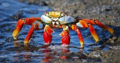 Pescadores de caranguejos processam empresas petrolíferas nos Estados Unidos por negar mudanças climáticas