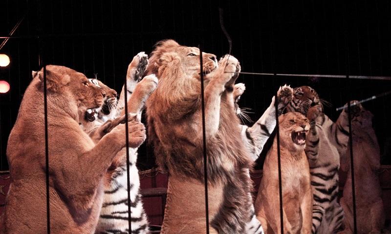 Portugal proíbe uso de animais selvagens em circos