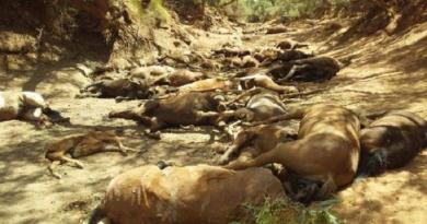 Dezenas de animais selvagens morrem com calor extremo na Austrália
