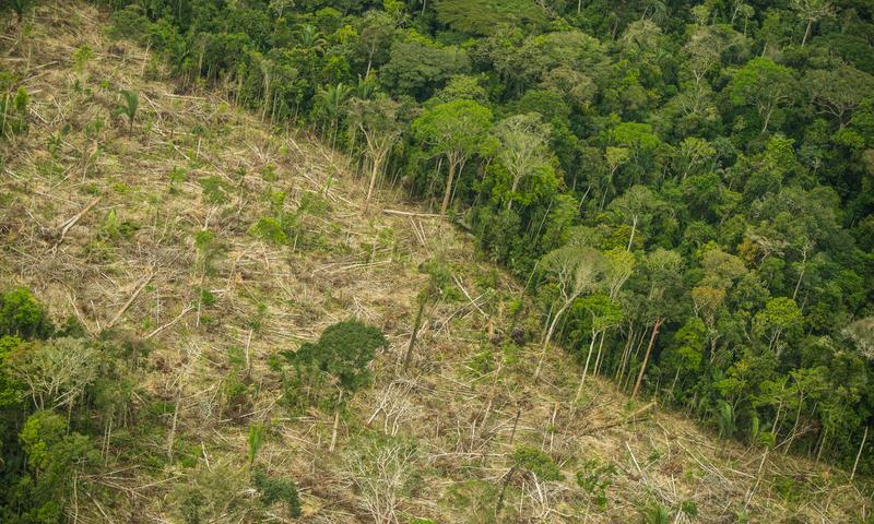 Grileiros intensificam invasão na Terra Indígena Karipuna, em Rondônia