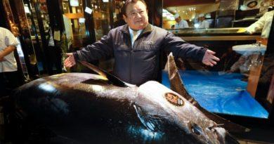 """Japonês, """"Rei do Sushi"""", compra em leilão atum, espécie em risco de extinção, por US$ 3,1 milhões"""