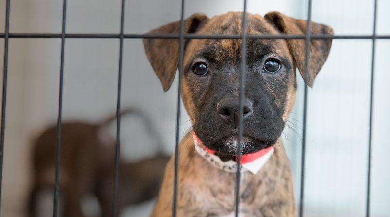 Lojas de animais da Califórnia só poderão vender cães, gatos e coelhos resgatados