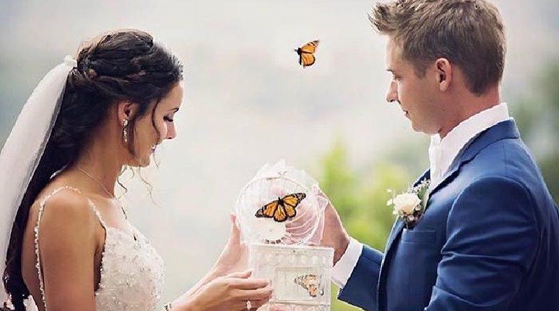 Soltar borboletas em festa de casamento não é legal. Na verdade, é ilegal. É crime ambiental!
