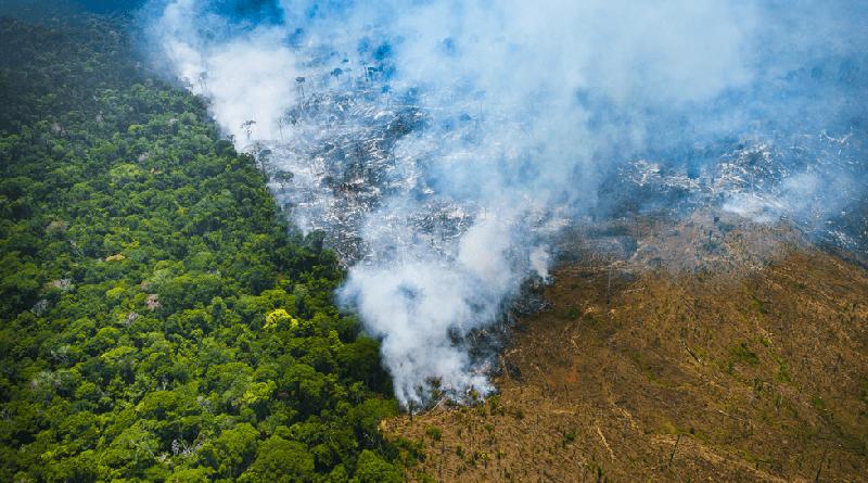 Desmatamento na Amazônia cresce pelo quinto mês consecutivo