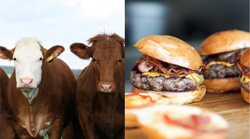 Investidores internacionais pressionam cadeias de fast food a reduzir emissões de carbono