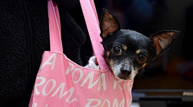 Nova lei libera embarque de pequenos animais em transporte público de São Paulo