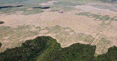 Desmatamento na Amazônia aumenta mais de 50% em janeiro