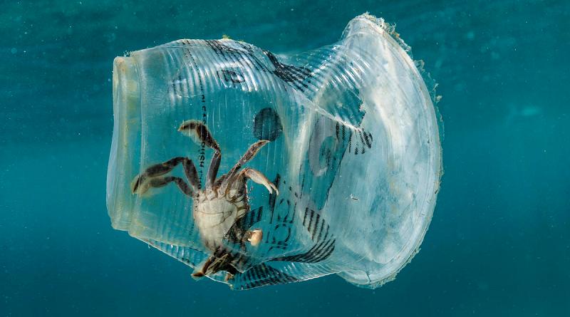 """""""Nestlé, pare de ameaçar a vida marinha com embalagens plásticas descartáveis!"""", pede campanha do Greenpeace"""