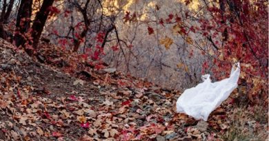 Estado de Nova York proíbe o uso de sacolas plásticas