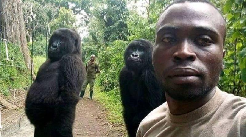 A história por trás da selfie de gorilas que viralizou nas redes sociais