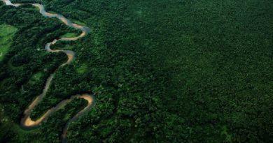Mata Atlântica registra menor índice de desmatamento em mais de 30 anos