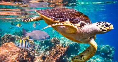 Um milhão de espécies estão ameaçadas de extinção, revela novo e alarmante relatório internacional
