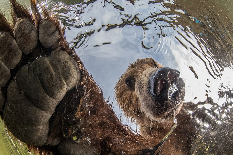 Imagens vencedoras do concurso da Academia de Ciências da Califórnia revelam flagrantes de beleza única da vida selvagem