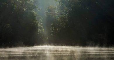 Projeto Pomar Urbano plantará 30 mil mudas de árvores nas margens do Rio Pinheiros, em São Paulo