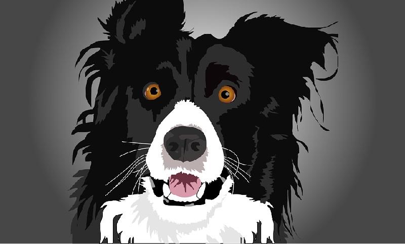 Cães sentem o mesmo nível de estresse de seus donos, comprova estudo internacional