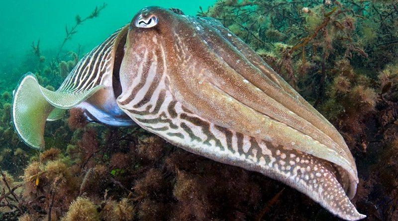 reino unido cria 41 áreas de conservação marinha
