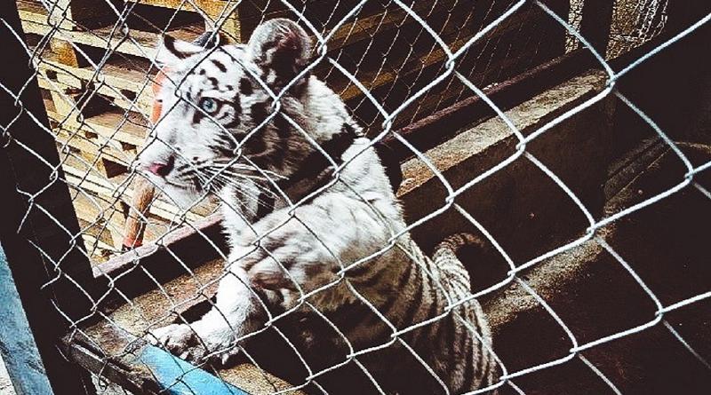 Milhares de animais são resgatados do tráfico por operação liderada pela Interpol em 109 países