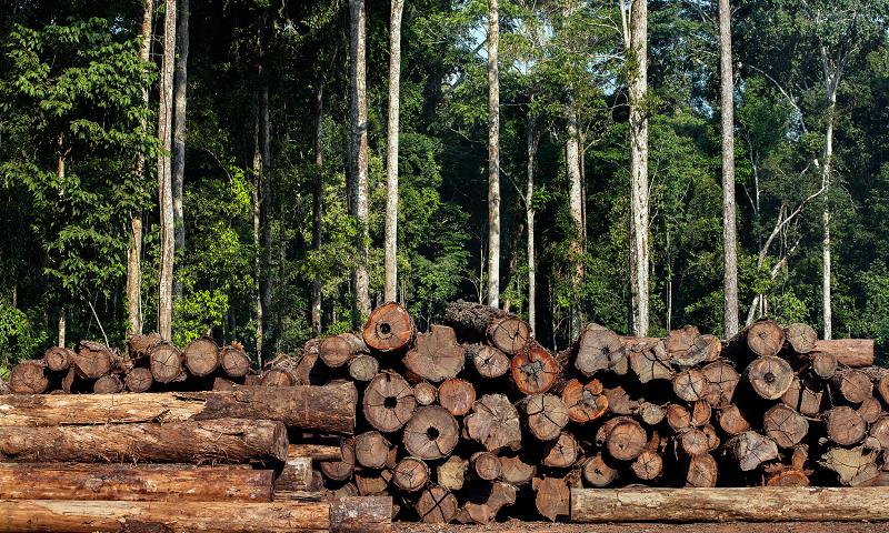 Proposta de licenciamento ambiental em debate em Brasília vai aumentar a destruição das florestas no país