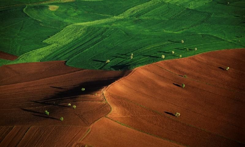 Segurança alimentar do planeta depende na redução do consumo de carne e melhor uso da terra, alerta novo relatório do IPCC
