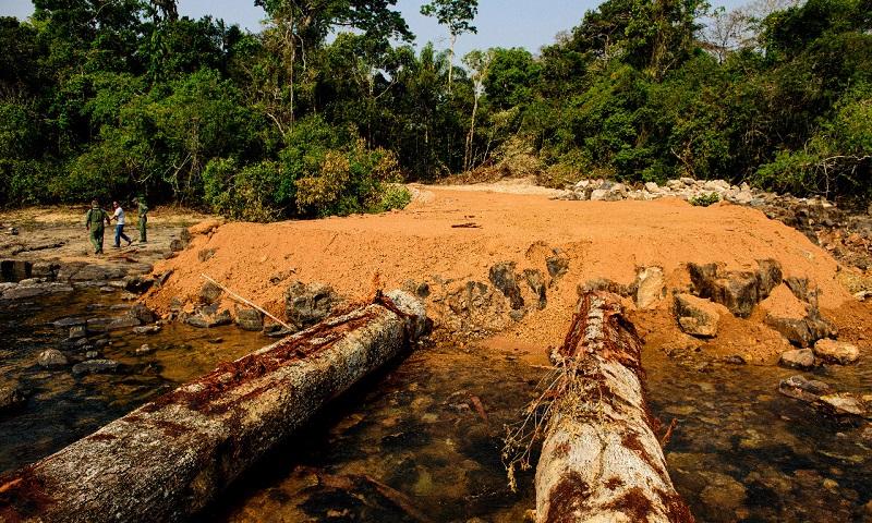 Brasil perdeu 2,5 Alemanhas em florestas em 34 anos