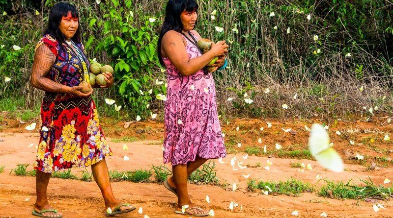 Indígenas brasileiros ganham prêmio internacional da ONU por soluções inovadoras na preservação ambiental