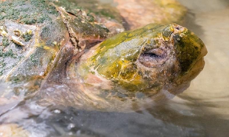 Tartarugas marinhas estão entre as vítimas do furacão Dorian, na costa dos Estados Unidos