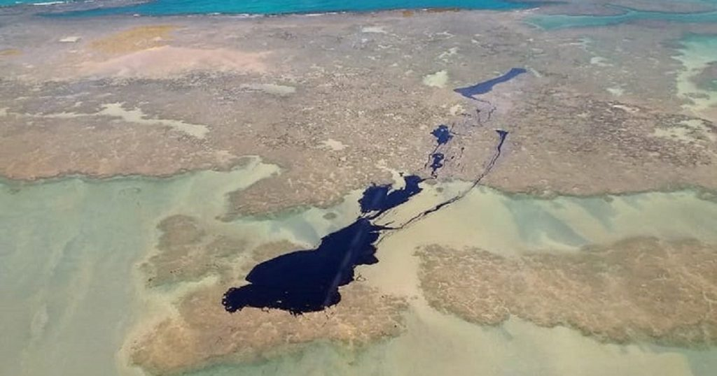 """""""Contaminação em manguezais e corais poderá durar muitos e muitos anos"""", alerta biólogo sobre impacto  do derramamento de óleo no Nordeste"""
