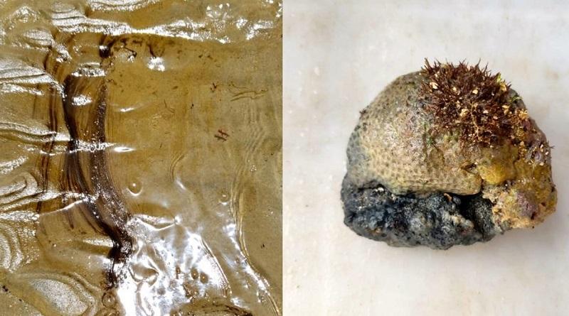 Óleo é encontrado em corais e sedimentos a 3 metros de profundidade no Rio Grande do Norte