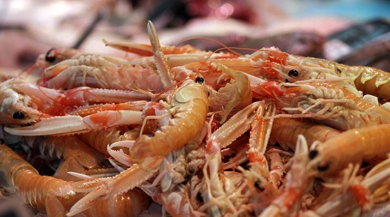 Pesca de camarão e lagosta está proibida, até 31 de dezembro, nas regiões afetadas pelo óleo no Nordeste