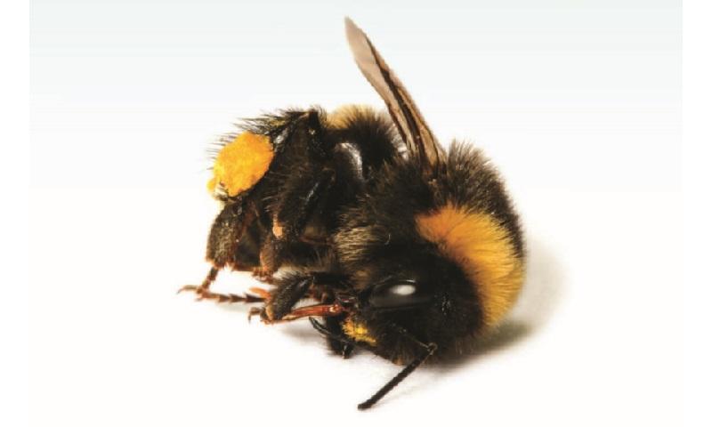 40% das espécies de insetos do planeta beiram a extinção. As causas?: pesticidas e perda de habitat