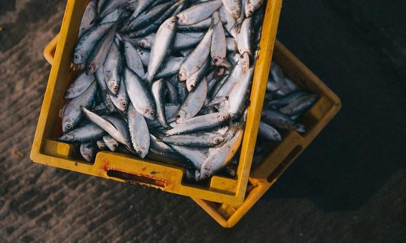 Em carta aberta, veterinários recomendam que não se consuma pescado nas áreas afetadas pelas manchas de óleo