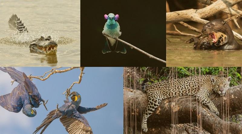 Conheça os finalistas do 3o Concurso Conexão Planeta de Fotografia de Animais!