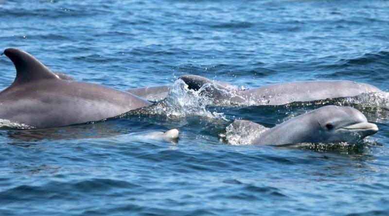 Golfinhos voltam a nadar e se reproduzir em rio símbolo dos Estados Unidos, 50 anos após sua limpeza e recuperação