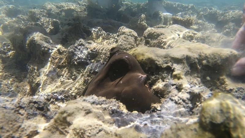 Mortalidade de corais na Bahia aumenta 10 vezes após contaminação de óleo, aponta novo estudo