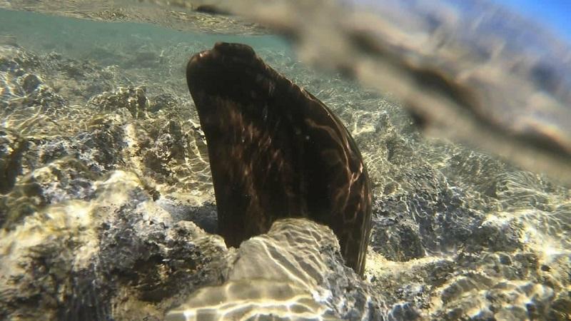 Óleo contamina recifes da Costa dos Corais, em Alagoas, uma das maiores barreiras do mundo