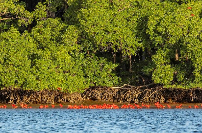 Uma tonelada de óleo é retirada do Delta do Parnaíba, no Piauí, e rios são descontaminados em Pernambuco