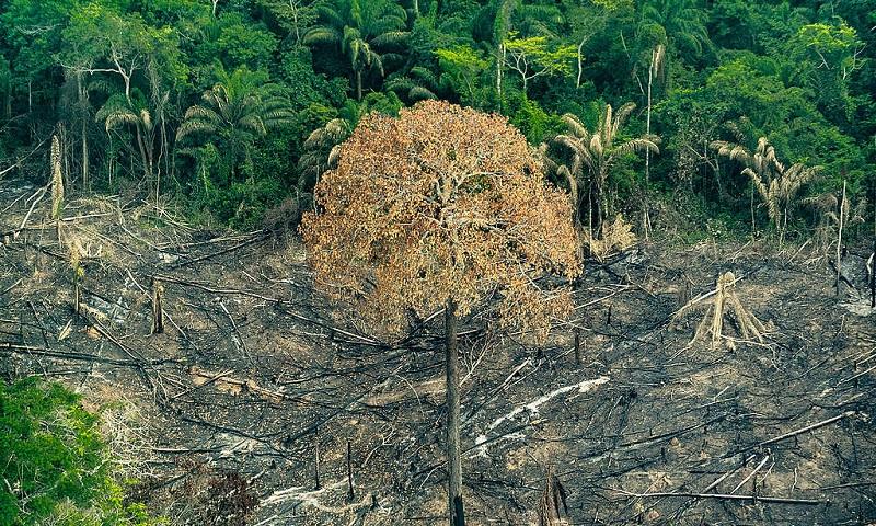 Organizações alertam que reação do governo ao desmatamento da Amazônia é insuficient