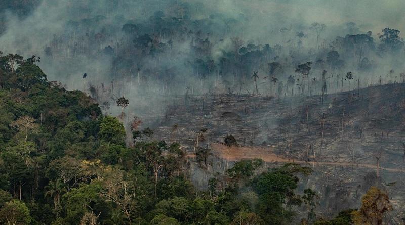 Governo dá presentão de Natal para quem desmata ilegalmente na Amazônia