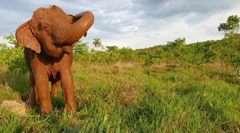 Morre Ramba, uma das moradoras do Santuário dos Elefantes Brasil