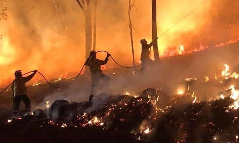 Austrália: quatro meses de incêndios, devastação e mortes