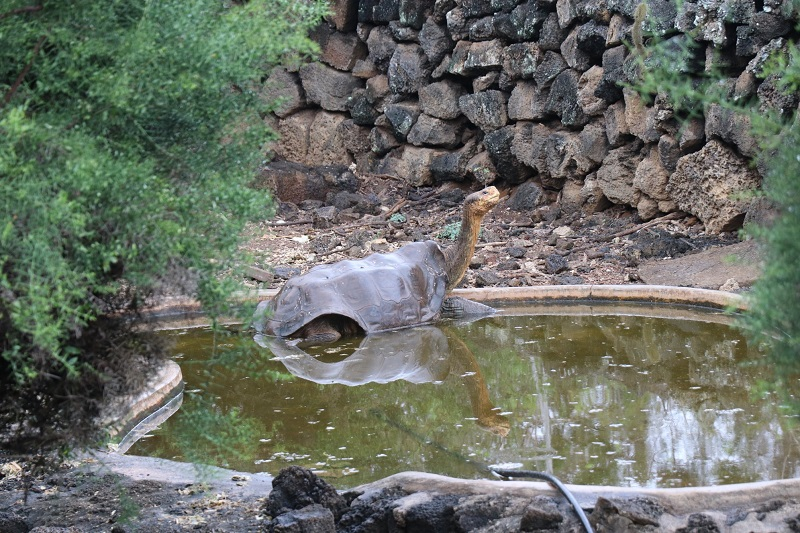 Depois de salvar sua espécie da extinção em Galápagos, Diego irá se aposentar