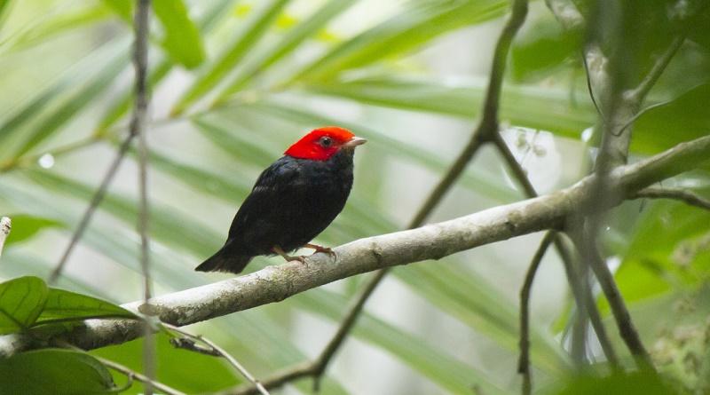 Monitoramento inédito de mais de 900 mil hectares de Mata Atlântica ajudará na pesquisa e preservação de espécies em risco de extinção
