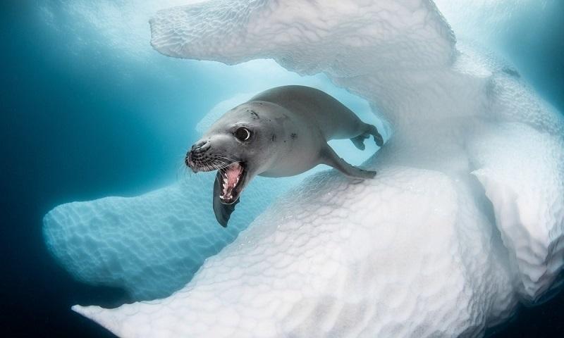 O mundo desconhecido e extraordinário do fundo do mar é revelado pelas lentes dos vencedores do Ocean Art Underwater Photo Competition