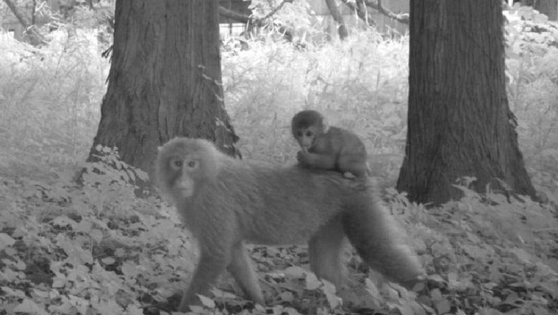 Quase uma década após acidente nuclear de Fukushima, no Japão, vida selvagem mostra resiliência e prospera