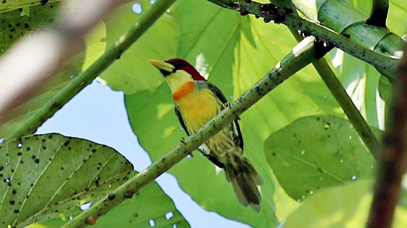 Expedição registra ocorrência de 31 novas espécies de aves em área de conservação no Acre: total já chega a 438